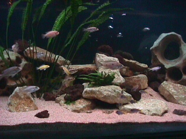 Bien d marrer un aquarium d 39 eau douce for Vendeur aquarium