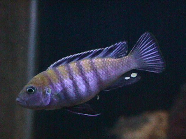 Célèbre bien choisir ses poissons UO43